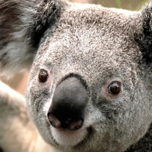 paul burf's avatar