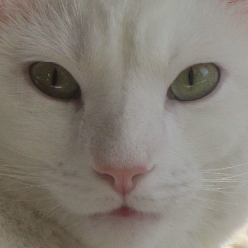 Brandy Durbin's avatar