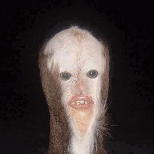 The Band Nostromo's avatar