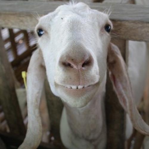 Like My Goat's avatar
