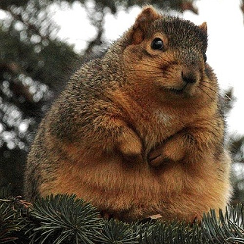 Chubby Squirrel S Stream Log in to finish rating chubby squirrel. chubby squirrel s stream