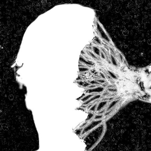 Bionica's avatar