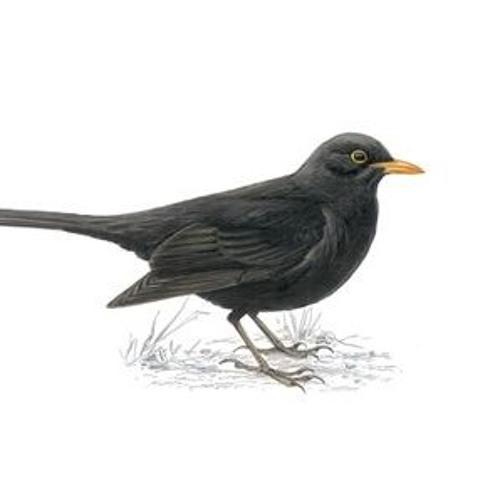 looking bird's avatar