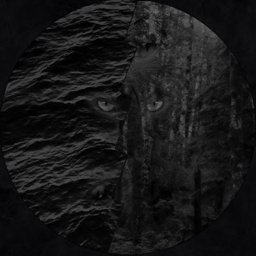 Nansenia Band's avatar