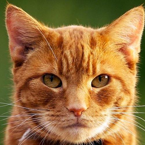 Bob Ratchet's avatar