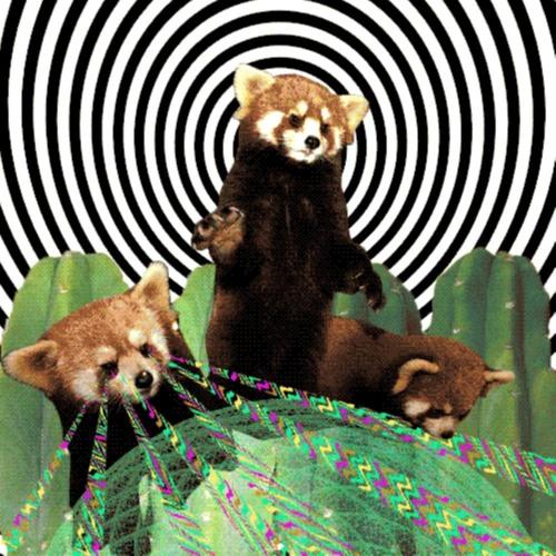 Red Panda's avatar