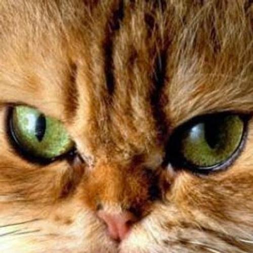 Neşe Altuner's avatar