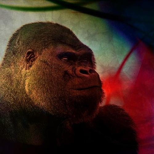 Deflated Gorilla's avatar