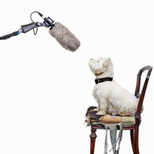 Singing Dog Studios's avatar