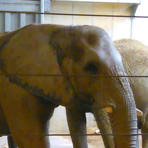 #elephant 345's avatar