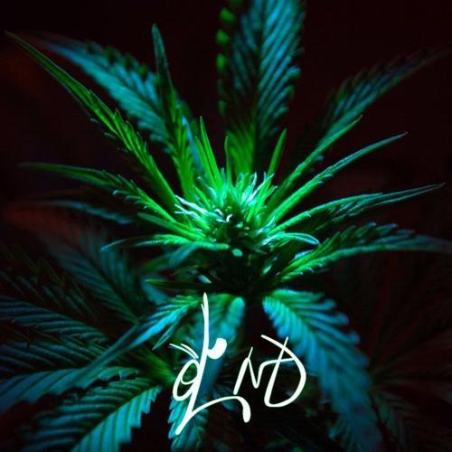 d'ND's avatar