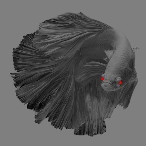 GS 41/3's avatar