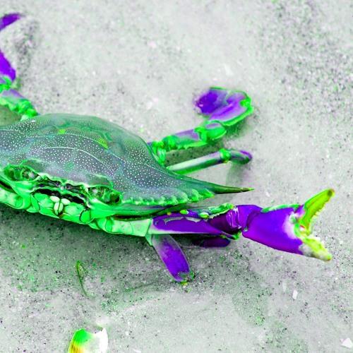 Soft Shell Crab's avatar