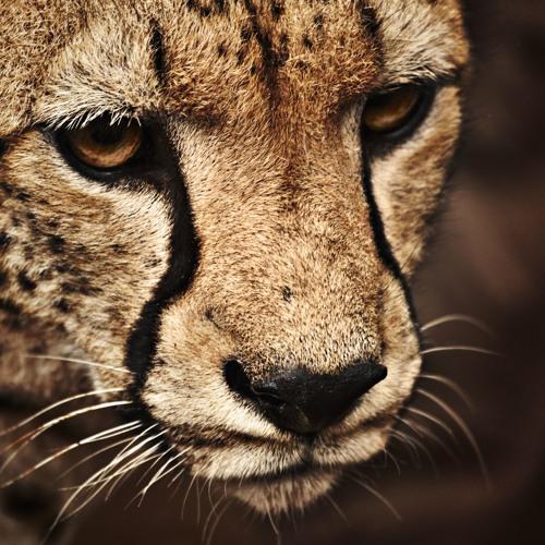eyeslife's avatar