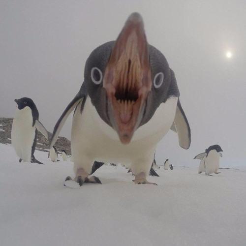 jonjoseph's avatar