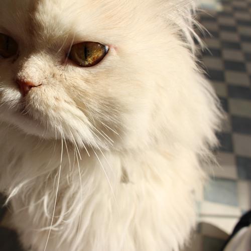 samabeirut's avatar