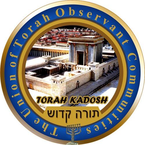 Torah Kadosh's avatar
