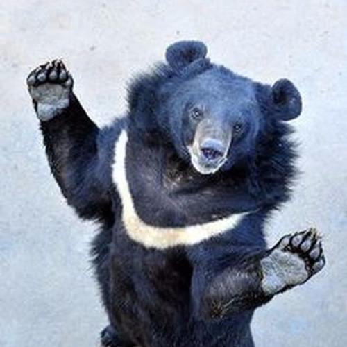 Black Moon Bear's avatar