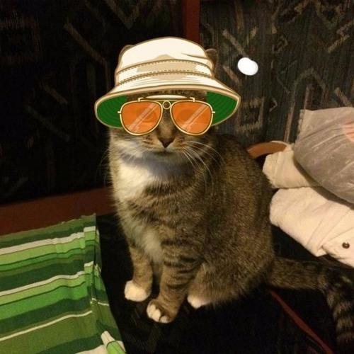 caurellian's avatar