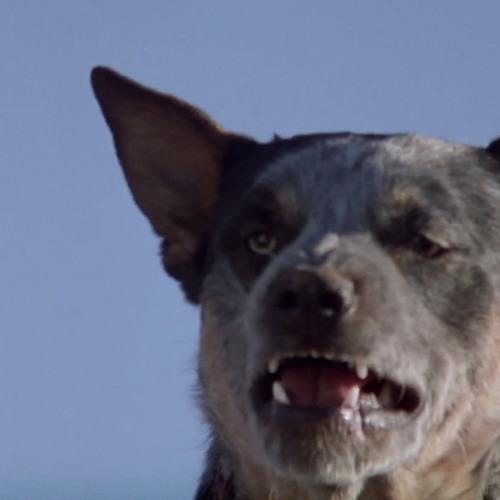Max Richter's avatar