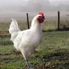 bob pouley