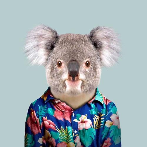 Koala's avatar