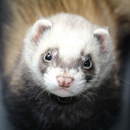 Dj MiArt's avatar