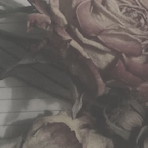 Undertheflowers's avatar