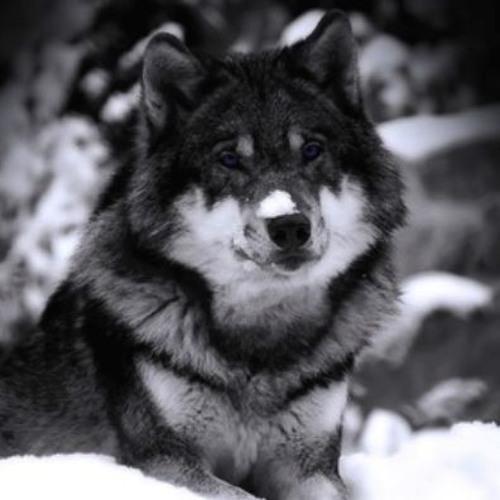 WolfGodric's avatar