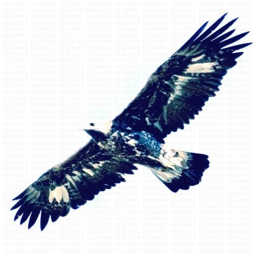 Vast Valley Valves's avatar