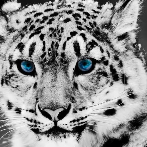 wolvessoccer2's avatar