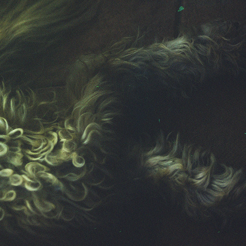 margebowhite's avatar