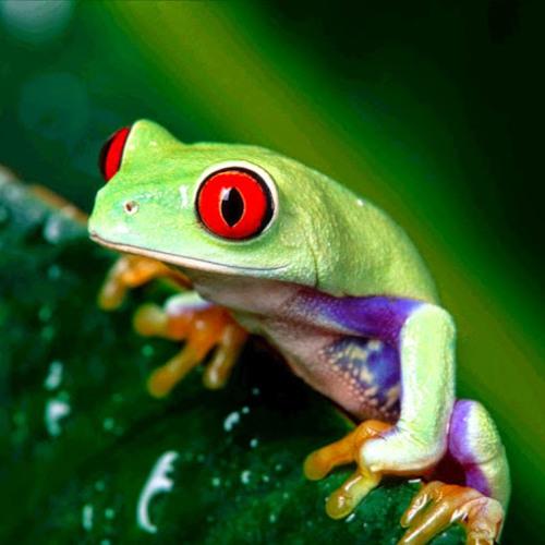 Tree Frog's avatar