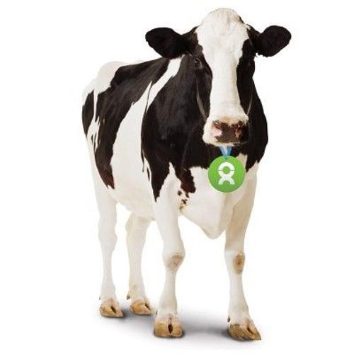 A COW's avatar