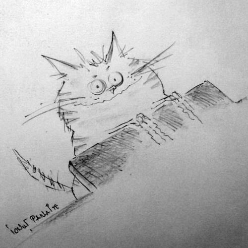 Florentin Ionut's avatar