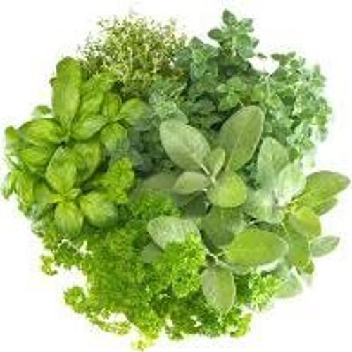lil herb's avatar