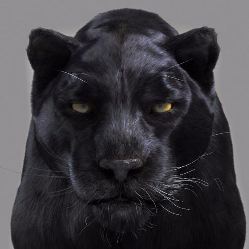 Mićaga Masni's avatar