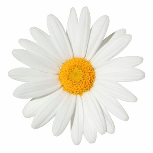 Chloe94's avatar
