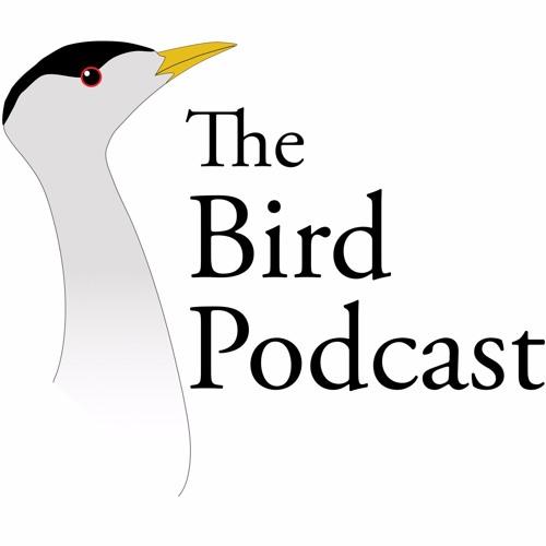 Bird Podcast's avatar