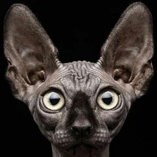 Morthaen's avatar