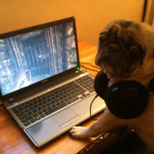 CommanderDog's avatar