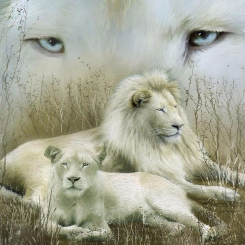 Akrylik the LION's avatar