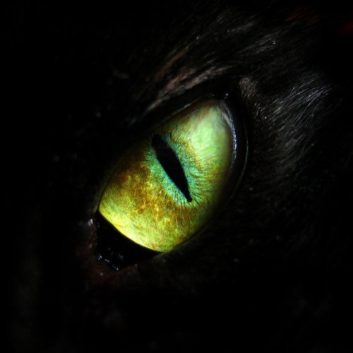 AlcatrazAnthony's avatar