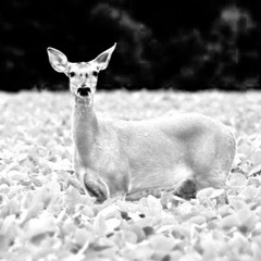Old Deer Ensemble