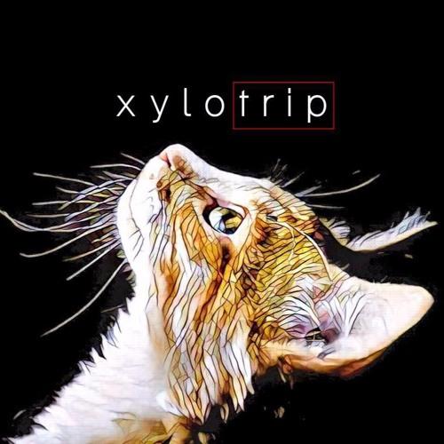 xylocasts's avatar