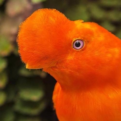 Henvelope's avatar