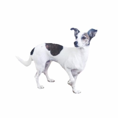 indiedoge's avatar
