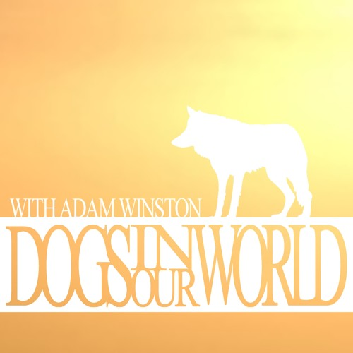 DOGS IN OUR WORLD's avatar