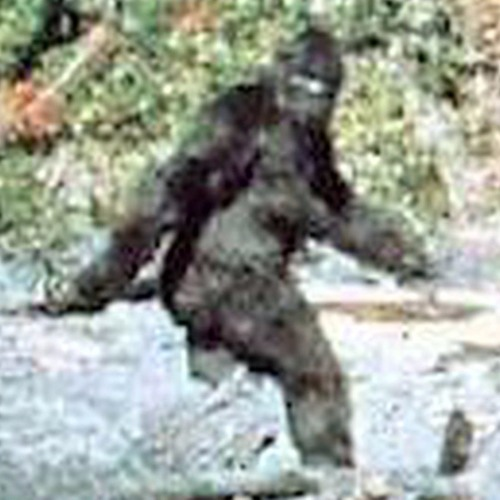 Bigfoot Dub's avatar