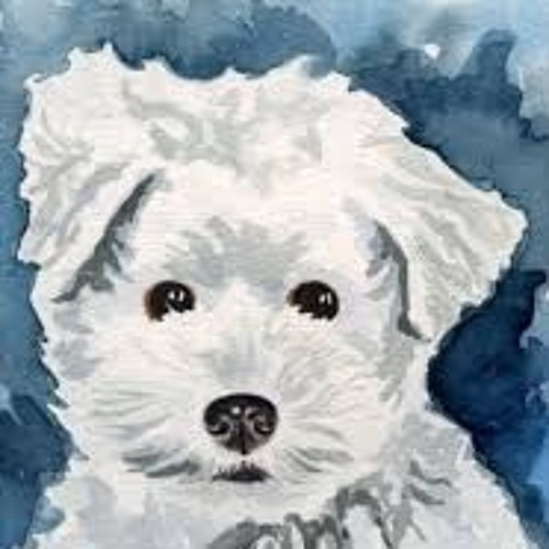 Bichon London's avatar